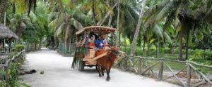 La Digue Seychelles buoi taxi