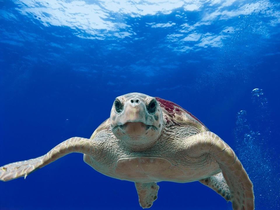 le tartarughe caretta caretta di lampedusa zingaro di macondo