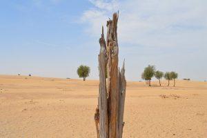 le cause della deforestazione zingaro di macondo